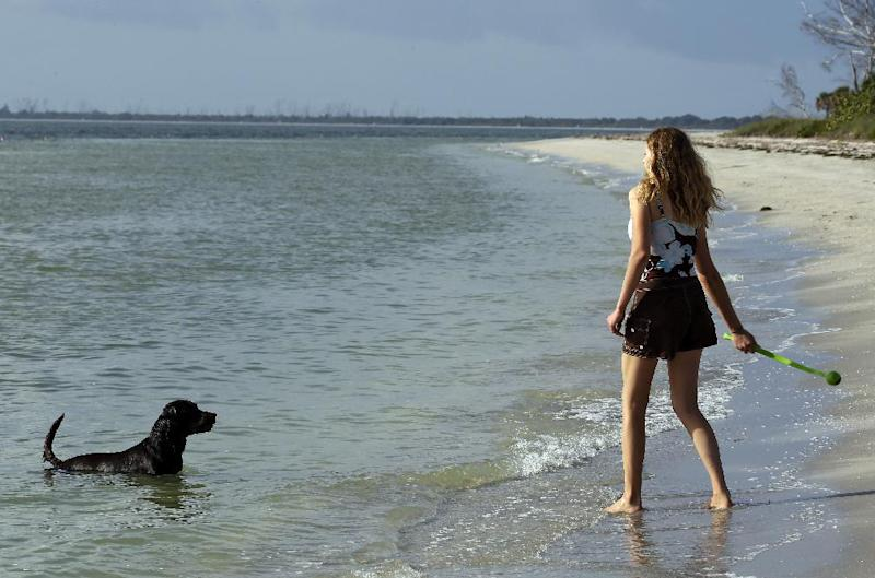 """In this Tuesday, Dec. 18, 2012 photo, Sarah Ranes, of Safety Harbor, prepares to throw a tennis ball to her dog """"Strider"""" on a dog friendly beach at Fort DeSoto Park in St. Petersburg, Fla. With miles of sandy beaches, endless winter sunshine and a laid-back vibe, there's no reason to leave your four-legged friend behind when you vacation in Florida. From lodging that offers special pet beds, to beaches with off-leash play, to theme parks with nearby kennels, many places around the state accommodate visitors with pets. (AP Photo/Chris O'Meara)"""