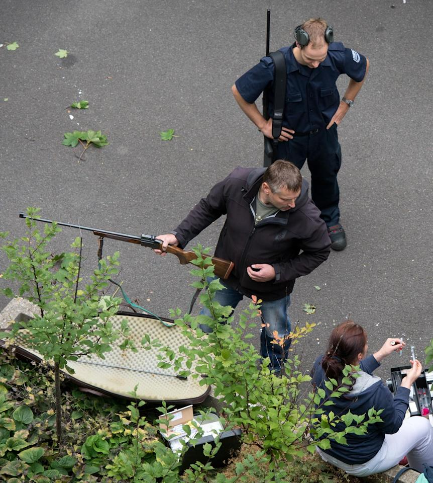 Police with tranquilizer guns prepare to capture a young moose in an administration building of Siemens in Dresden, Germany, Monday Aug. 25, 2014. A spokesman for Dresden police says the young bull walked into the offices of German industrial giant Siemens on Monday and got stuck behind a glass wall. Marko Laske says officers and wildlife are trying to shoo the moose into a container so he can be taken to the local zoo. Moose are rare in Germany and the animal is likely to have come from neighboring Poland. (AP Photo/dpa,Arno Burgi)