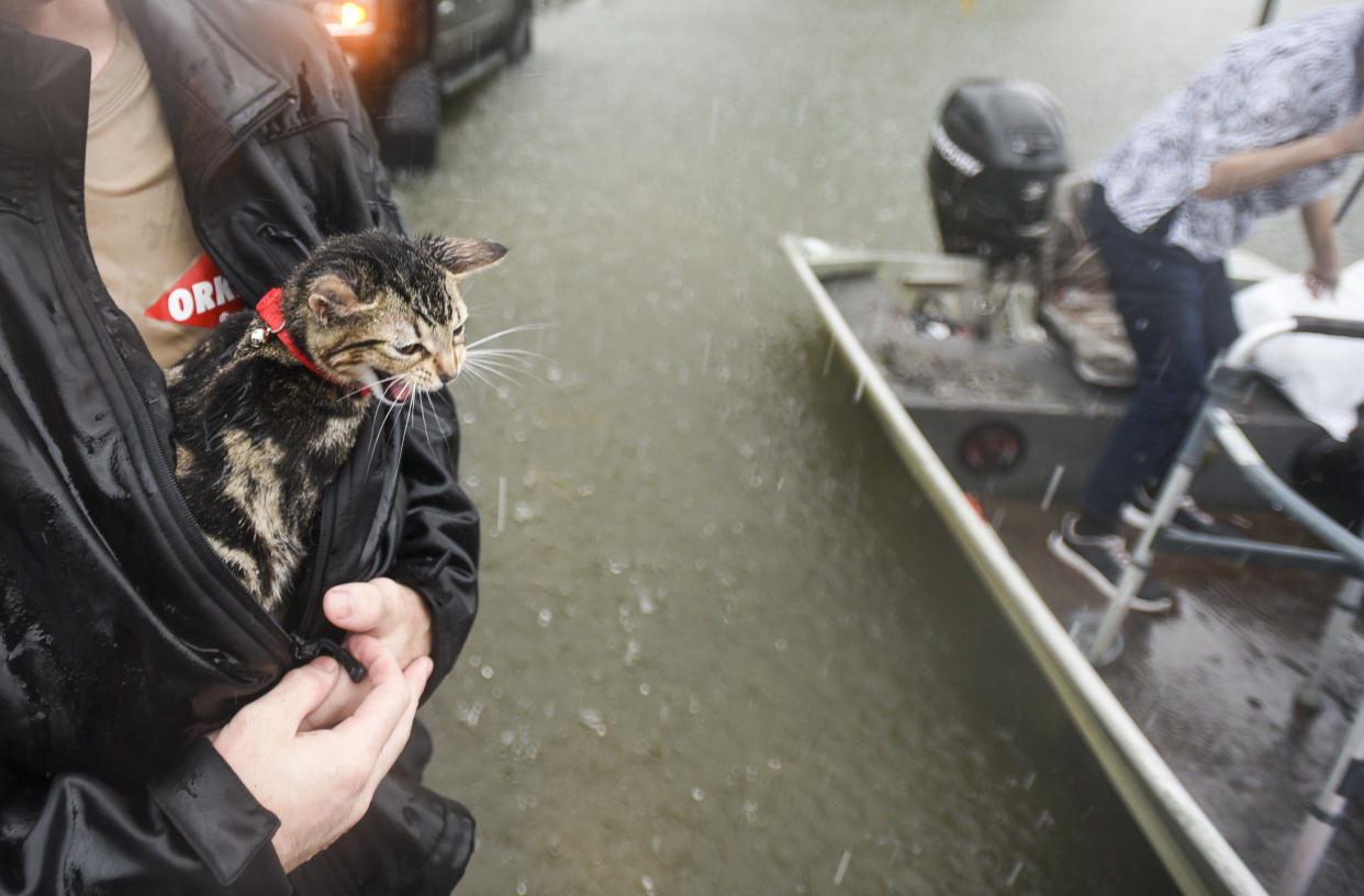Levi Kelley's cat, named Cat, meows as Kelley shelters him from the rain with his jacket. as the two were rescued from their RV after water trapped them in Sept. 19, 2019, in Vidor, Texas, following flooding from Tropical Depression Imelda. (Photo: Ryan Welch/The Beaumont Enterprise via AP)