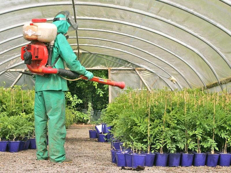Laws to protect public health 'such as on pesticide residues on food' are at risk after Brexit, researchers warn: Rex