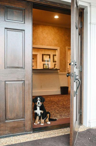 PHOTO: Bernese Mountain Dog, Mochi, sits in the doorway of Macon Funeral Home in Franklin, North Carolina. (Credit: Courtesy of Callie Lynch Photography)