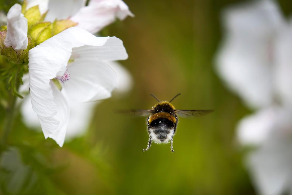 The results could have a big impact on agriculture but need to be tested in a real life environment  (AFP via Getty Images)