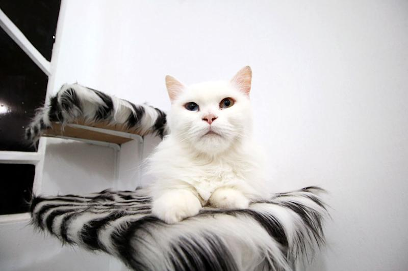 Women Good at Recognising Cats' Expressions, Says Study