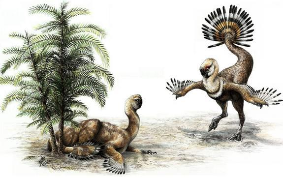 New research suggests male oviraptor dinosaurs would shake their tail feathers to woo potential female mates (reconstruction of such dino-wooing shown here).