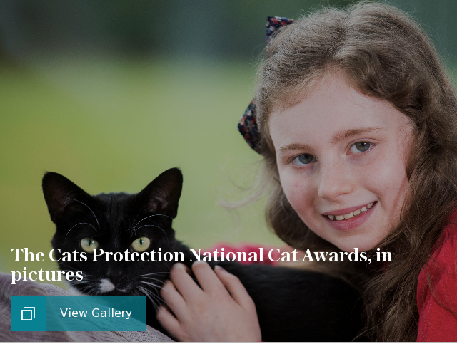 The Cats Protection National Cat Awards, in pictures