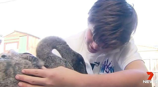 Joshua used training from his aunt to help the swan. Source: 7 News