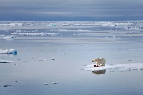In the Arctic, melting sea ice is expanding the season and the range of cruises available - Credit: getty
