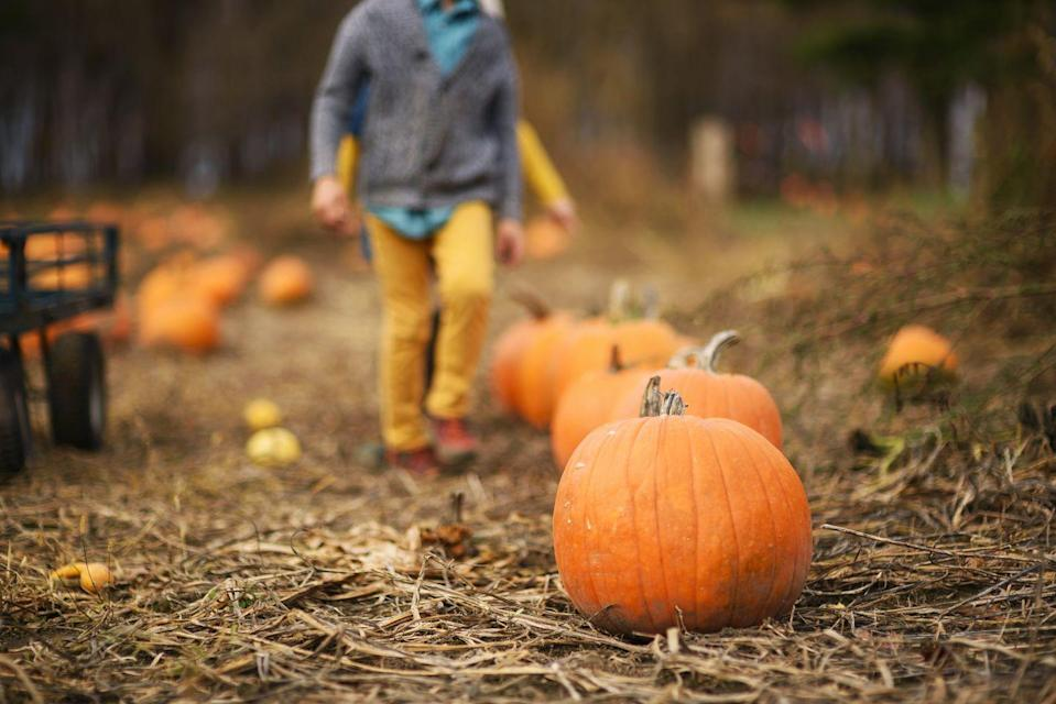 """<p><strong>Upper Marlboro, Maryland (Sept 18–Nov 7)</strong></p><p>Duck races, gemstone mining, and kart racing hardly cover the near-endless list of activities available at <a href=""""http://www.montpelierfarms.com/"""" rel=""""nofollow noopener"""" target=""""_blank"""" data-ylk=""""slk:Montpelier Farms"""" class=""""link rapid-noclick-resp""""><strong>Montpelier Farms</strong></a>. But make sure you get there before 9 p.m., which is when the last tickets are sold. General admission is $12, but children 2 and under are free. If you're obsessed, you can also get a season pass to go again and again this fall.</p><p><em>*This photo is not from Montpelier Farms.</em></p>"""