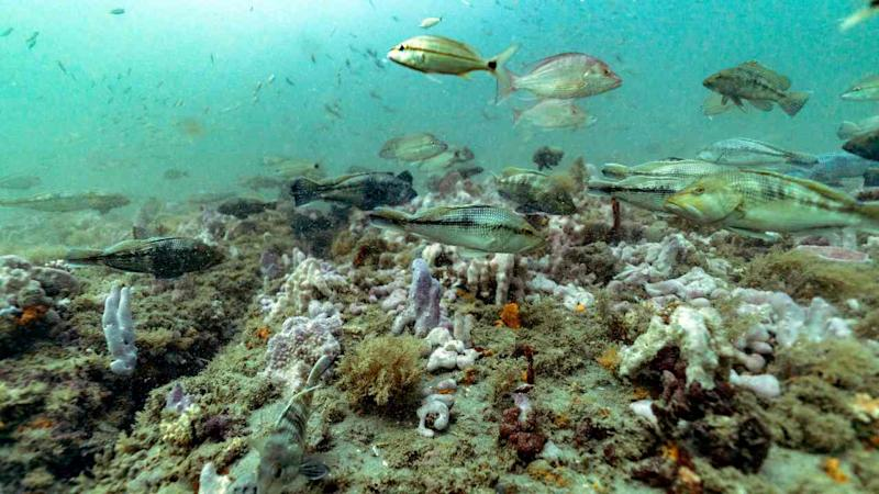 How a tiny stretch of vibrant ocean stirred a global marine conservation movement