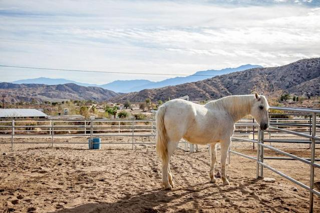 <p>The carriage house is located on the Crazy Horse Ranch, which operates a rescue centre for horses, as well as cats and dogs. (Airbnb) </p>