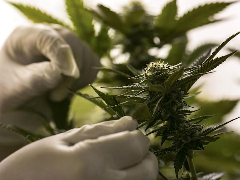 Tilray Leads Cannabis Gains, Poised to Snap Three-Day Slump