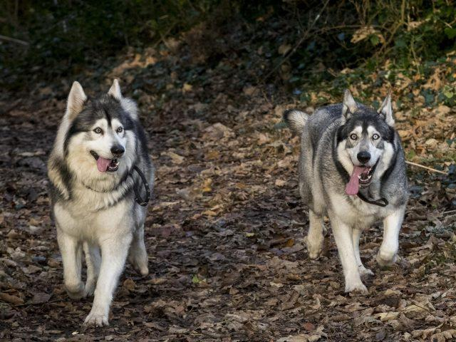 Celebrities have made offers to buy Odin (left) and Thor (Liam McBurney/PA)