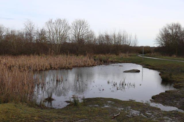 A healing nature site at Colliery Wood, South Tyneside