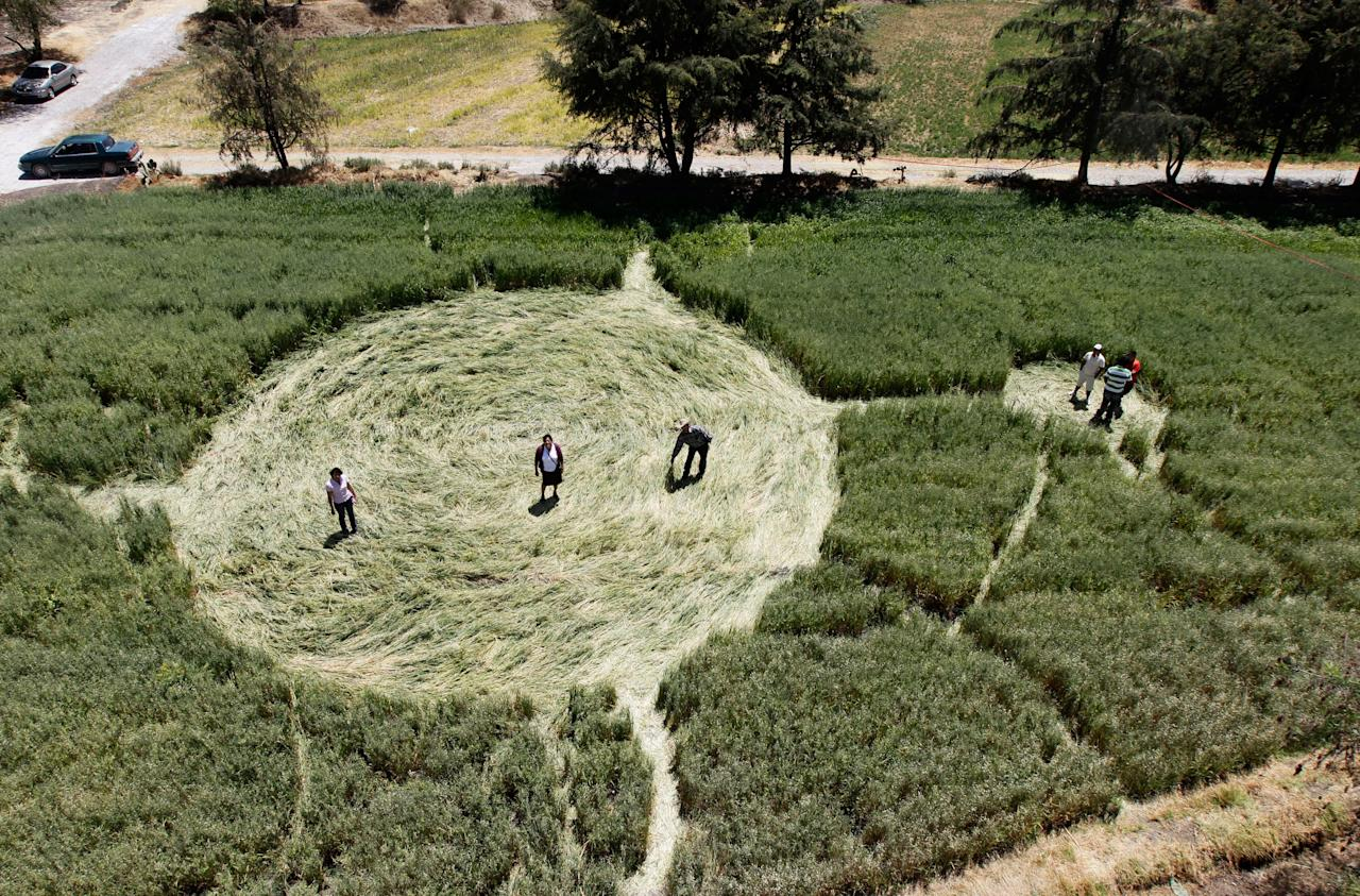 People stand inside one of five crop circles in an oat field in Tlapanoloya on the outskirts of Mexico City March 23, 2011. Five geometric patterns of pressed oat stalks were sighted by locals on two different fields since they appeared on Saturday and Sunday. (REUTERS/Henry Romero)