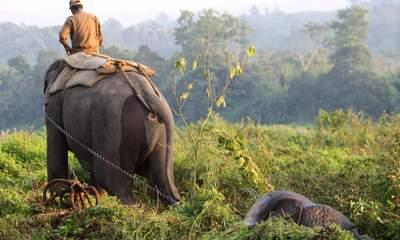 One-Horn Rhinos 'Poached By AK-47 Insurgents'
