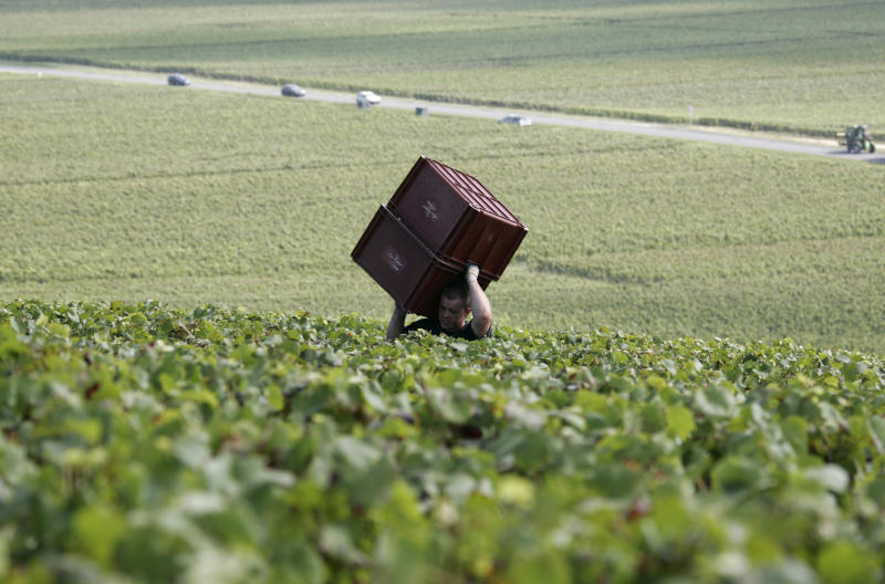 FILE - In this Aug.30, 2007 file photo, a worker carries boxes during grape harvest near Epernay, Champagne region. Europeans are finding fewer reasons to pop open a bottle of Champagne as another year of economic troubles and high unemployment saps the region's joie de vivre, latest industry figures show. But while a taste for a glass of bubbly might be on the wane in Europe, other markets, particularly Japan and the United States, are developing a growing taste for sparkling luxury with a brand name.(AP Photo/Francois Mori, File)