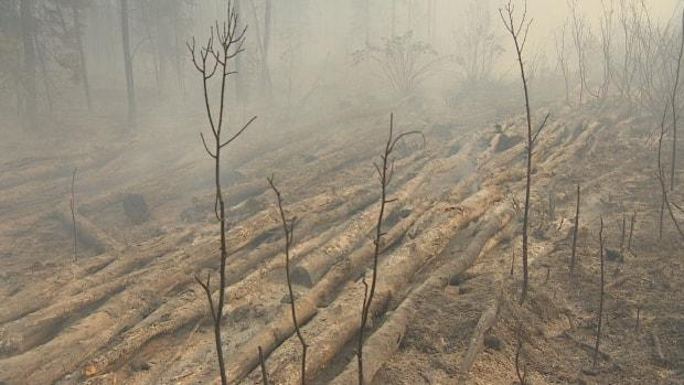 Wildfires in northern Saskatchewan have been causing significant damage to trees and other wildlife areas. (Don Somers/CBC - image credit)