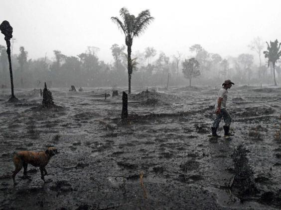 Swathes of the Amazon rainforest are turning to ashes as fires ravage the greenery (AFP/Getty Images)