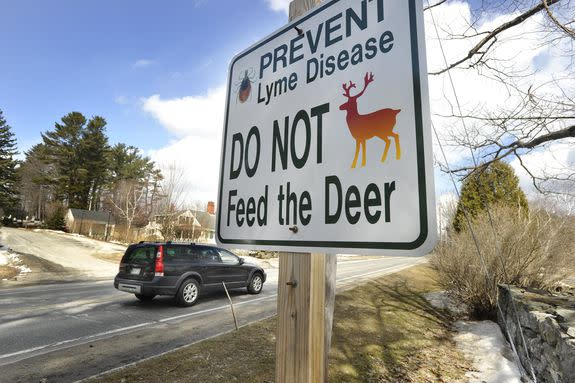 Deer are critically important hosts for ticks.