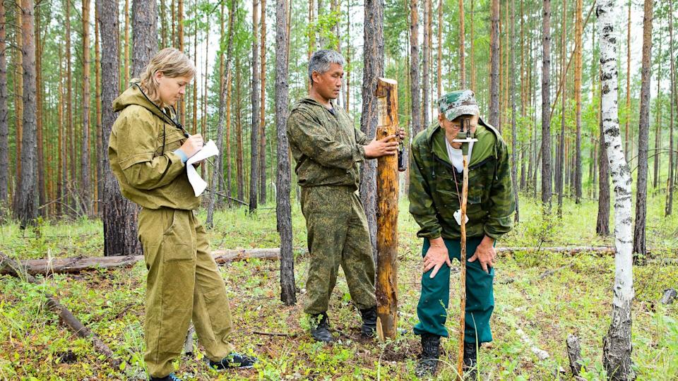 Forestry inspector with a group of foresters marking out the plot for sanitary felling of the forest.