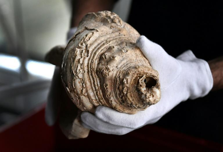 The tip of the shell would not have broken off by accident, the study found