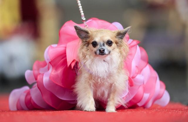 Furbabies dog Pageant
