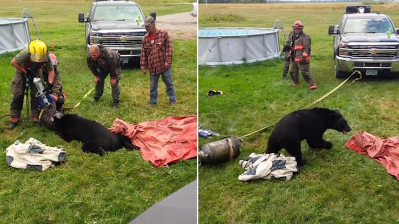 Minnesota Firefighters Rescue Bear with Its Head Stuck in Milk Can