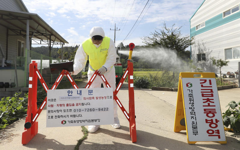 "A quarantine official wearing protective gear places a barricade as a precaution against African swine fever at a pig farm in Paju, South Korea, Tuesday, Sept. 17, 2019. South Korea is culling thousands of pigs after confirming African swine fever at a farm near its border with North Korea, which had an outbreak in May. The notice reads: ""Under quarantine."" (Kim Sun-ung/Newsis via AP)"