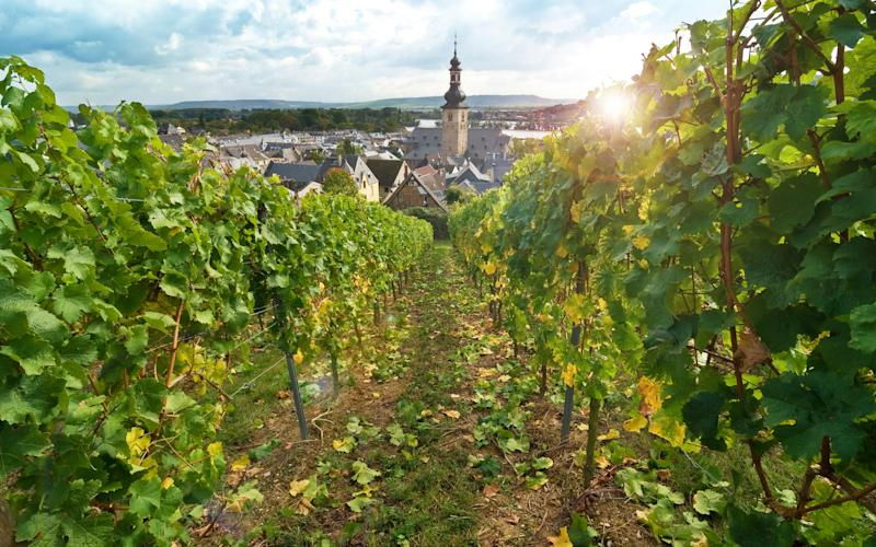 The pretty wine-making town of Rüdesheim is a highlight on most Rhine cruises - andrewburgess