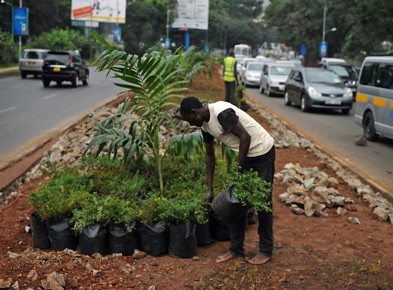 A worker prepares to plant trees and bushes on a kerb along a street in Nairobi on July 9, 2015 (AFP Photo/Tony Karumba)