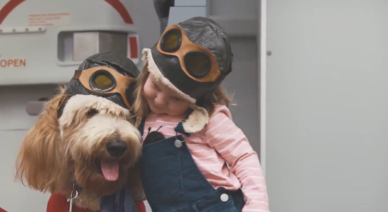 Virgin Australia's new Canine Crew: Twitter/Virgin Australia