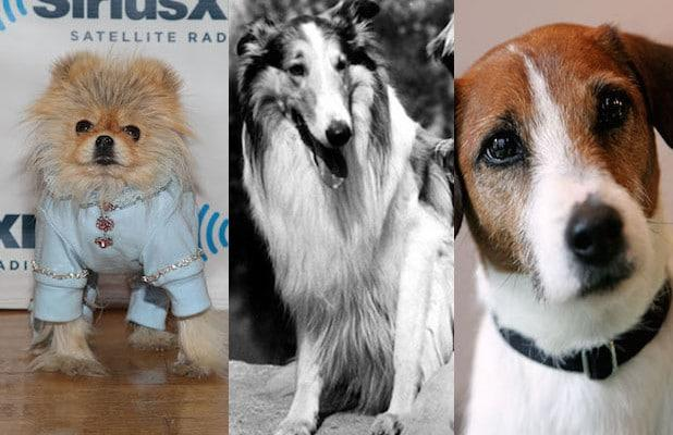From Wags to Riches: 9 of TV's Most Famous Dogs (Photos)