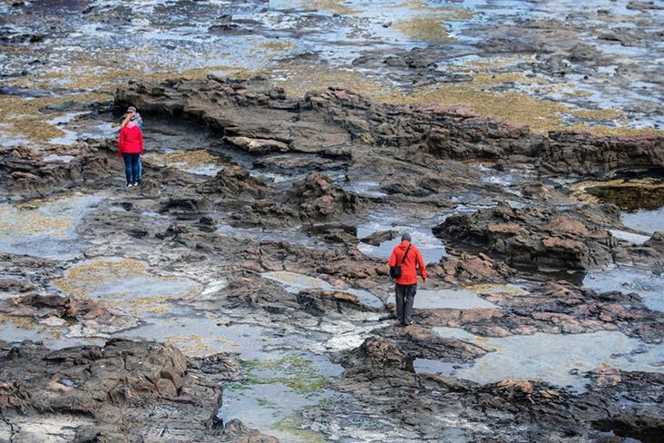 Beneath the waves at Curio Bay, a petrified forest is revealed during low tide. — Pictures by CK Lim
