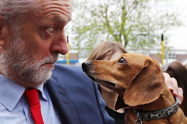 <p>Labor Leader Jeremy Corbyn is startled by Cody the Dachshund during a campaign event outside the James Paget Hospital on May, 13, 2017 in Great Yarmouth, England. (Photo: Dan Kitwood/Getty Images) </p>
