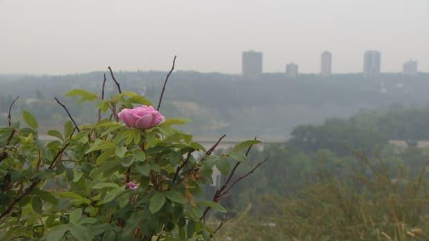 Smoke shrouds Edmonton Monday as wildfires continued to burn across Western Canada.  (Jamie McCannel/CBC - image credit)