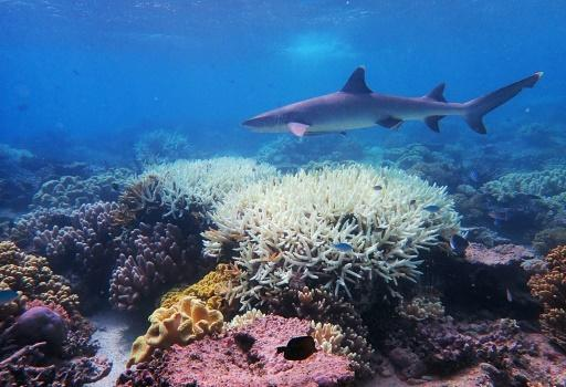 Australia's Great Barrier Reef has suffered its most widespread coral bleaching on record, scientists say, in a dire warning about the threat posed by climate change to the world's largest living organism