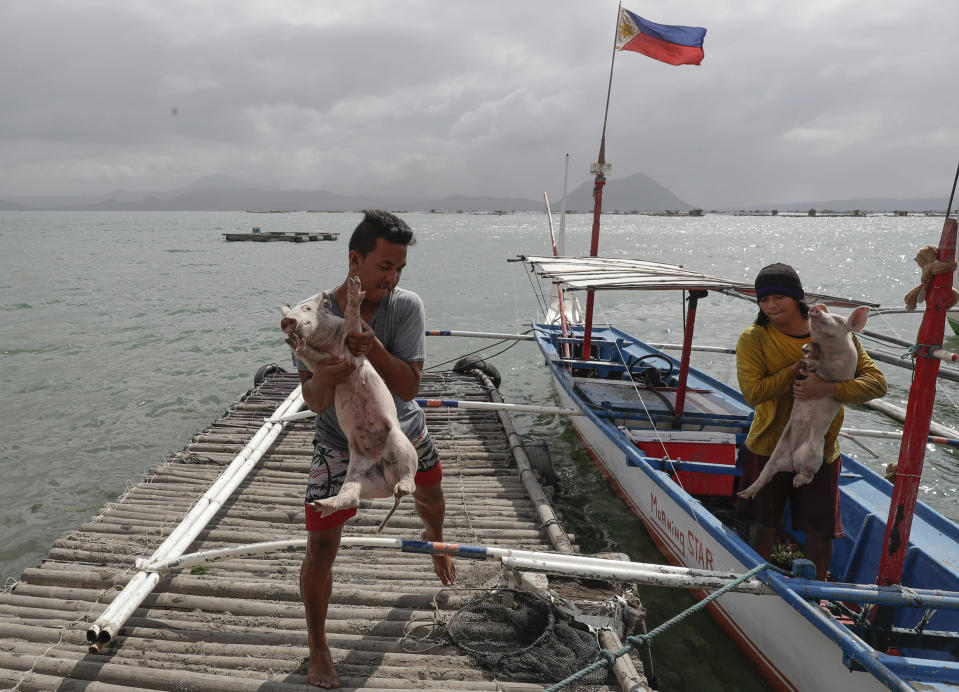 FILE - In this Jan. 14, 2020, file photo, men carry piglets which they rescued across the lake in Talisay, Batangas province, southern Philippines, as Taal volcano continues to spew ash. So far no one has been reported killed in the eruption, but the disaster is spotlighting the longstanding dilemma of how the government can move settlements away from danger zones threatened by volcanoes, landslides, floods and typhoons in one of the world's most disaster-prone countries. (AP Photo/Aaron Favila, File)