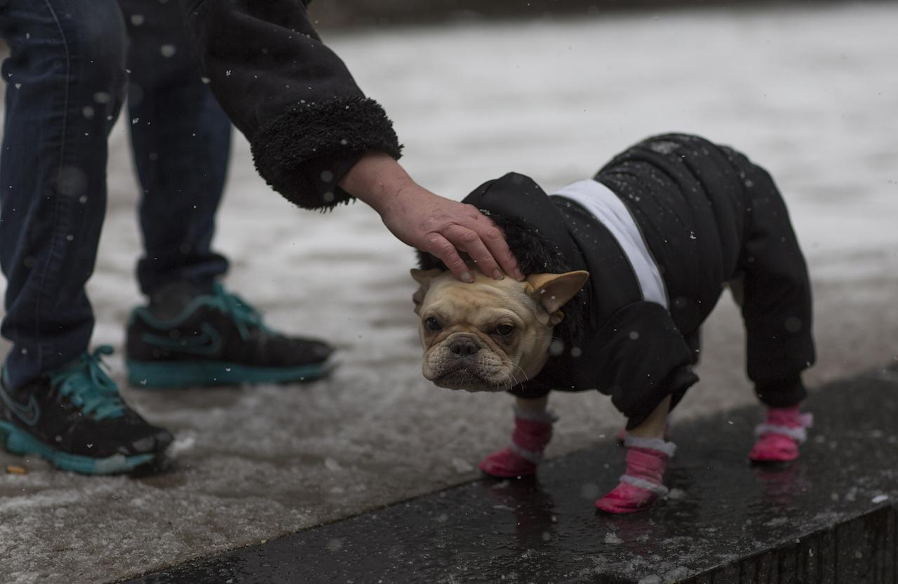 <p>'Woofie' gets some attention while on her walk in the snow in Boston, Mass., Dec. 9, 2017. (Photo: C.J. Gunther/EPA-EFE/REX/Shutterstock) </p>