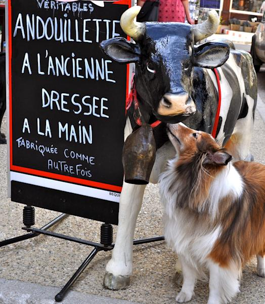 "In this May 2011 photo provided by Sheron Long, Chula, a 30-pound Shetland sheepdog and veteran traveler, noses a fake cow outside a butcher shop in the hilltop village of Sault, France. Travel for humans during holidays is tough enough: Long lines, crowds everywhere, extra bags full of presents. Throw a pet in the mix, and it's a recipe for disaster. Long is the author of ""Dog Trots Globe - To Paris and Provence."" (AP Photo/Sheron Long, Sheron Long)"