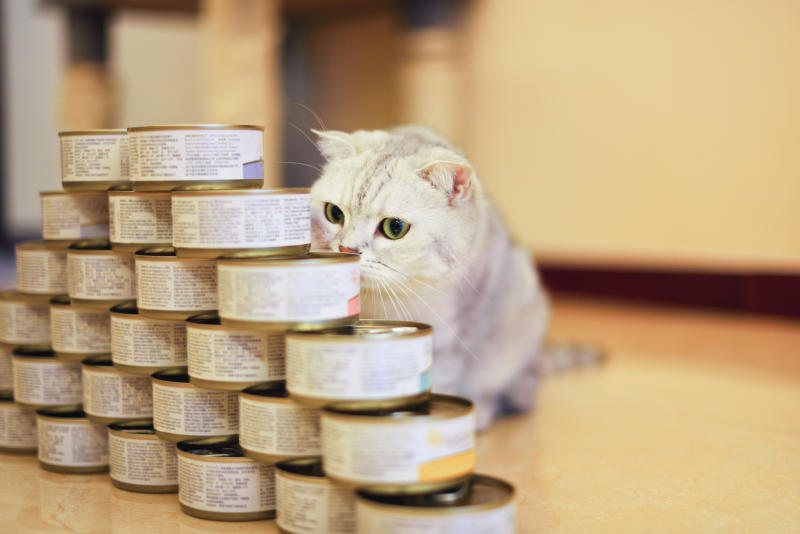 Shop all things pet at Amazon Pantry. (Photo: Getty)