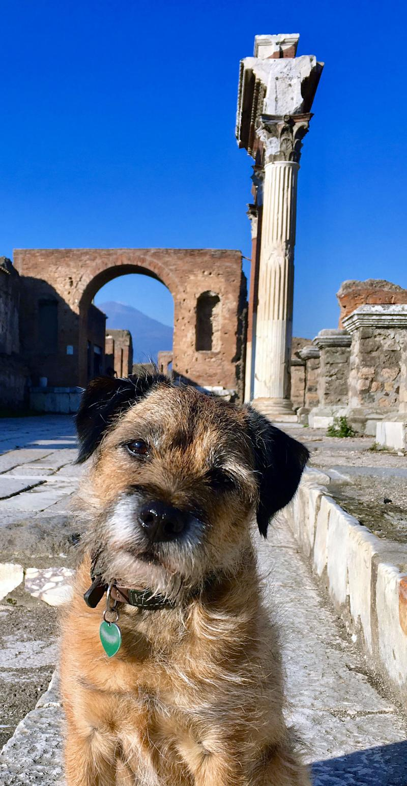 Pete the border terrier in Pompeii. (Photo: Caters News)