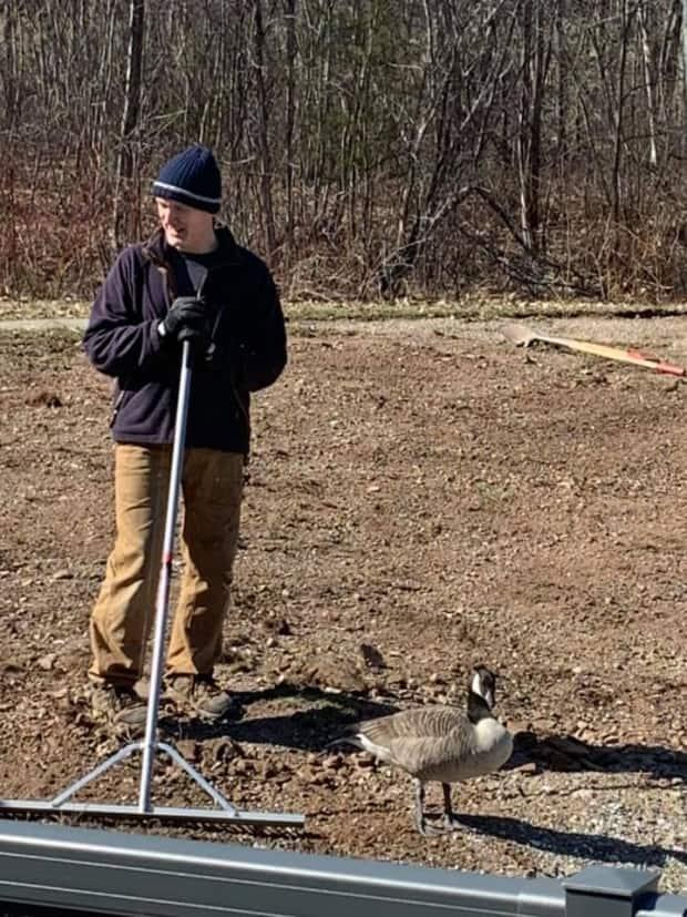George was out doing yardwork when the goose caught his eye.