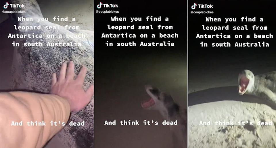 The TikTok user's posts after touching a leopard seal he thought was dead.