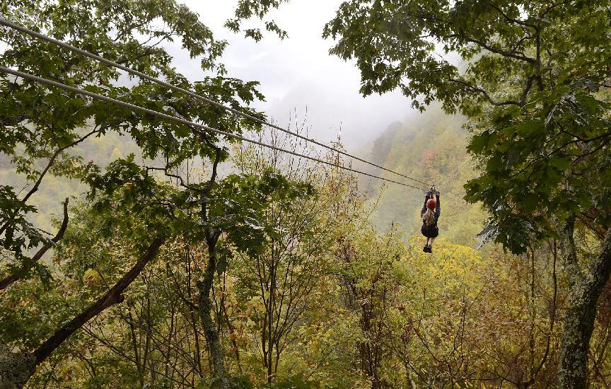 In this photo taken October 17, 2013 Holly Raymond, of the Tampa Bay, Fla., area flies through the colorful misty trees at Navitat Canopy Adventures in Barnardsville, N.C. While colors in the northern, higher elevations of South Carolina are still emerging, trees are exploding with color at the upper elevations in western North Carolina. (AP Photo/John D Simmons, Charlotte Observer) MAGS OUT; TV OUT; NEWSPAPER INTERNET ONLY