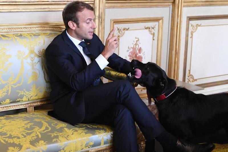 Finding Nemo: Emmanuelle Macron with his four-legged friend (Getty)