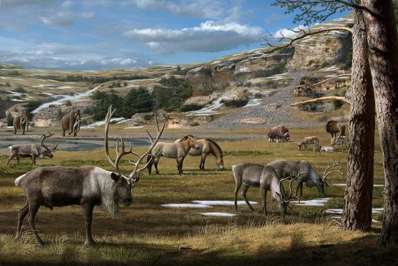 Woolly Mammoths and Rhinos Ate Flowers