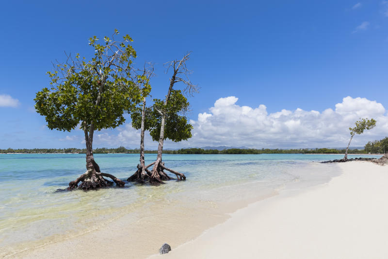 A pristine beach on the east side of Mauritius before the oil spill. Mangroves and white beach.