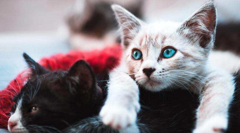 Can Pet Cats and Dogs Get Coronavirus From Humans? Here's Everything You Should Know About Human to Animal Transmission of COVID-19