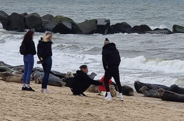 People close to seals at Horsey beach in Norfolk