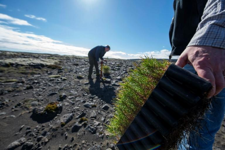 Adalsteinn Sigurgeirsson (R), and Hreinn Oskarsson, both of the Icelandic Forest Service, are involved in reforestation efforts (AFP Photo/Halldor KOLBEINS)